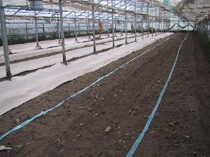 2007年 トマト畝作り2